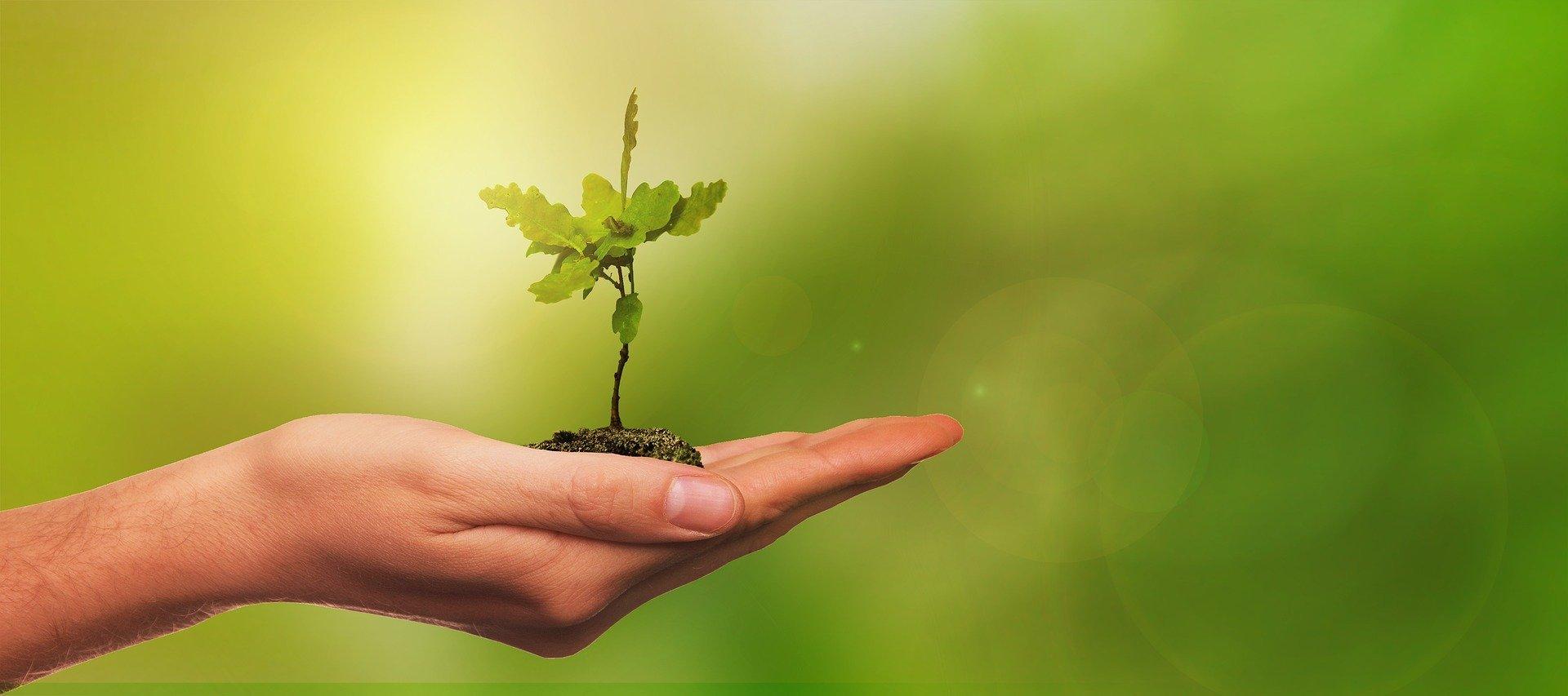 A prosperidade e os custos ambientais